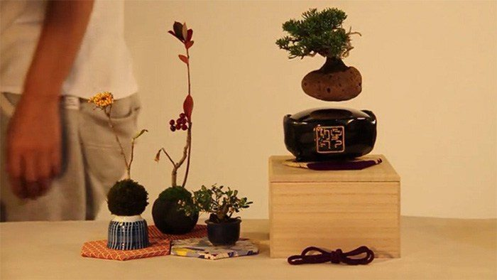 floating-bonsai-trees-air-hoshinchu-66