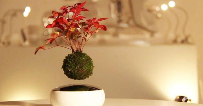 floating-bonsai-trees-air-hoshinchu-fb__700-png