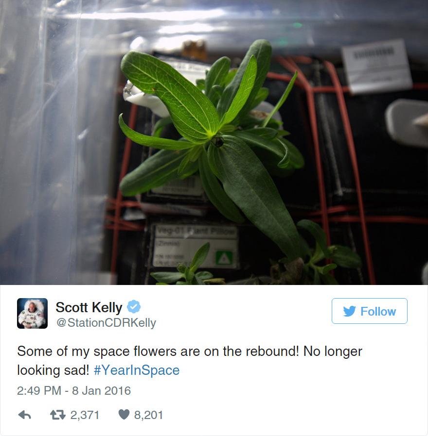 space-first-flower-bloom-nasa-scott-kelly-19