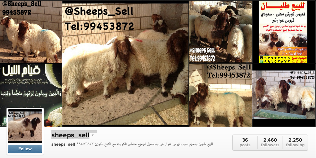 sheeps-sell-kuwait
