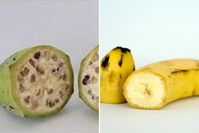 Banana_2670646a