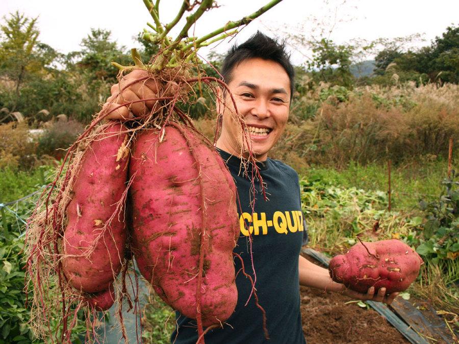 big-potato-1181af98982e14c3db199e3ecbf273b3756a2d56-s900-c85