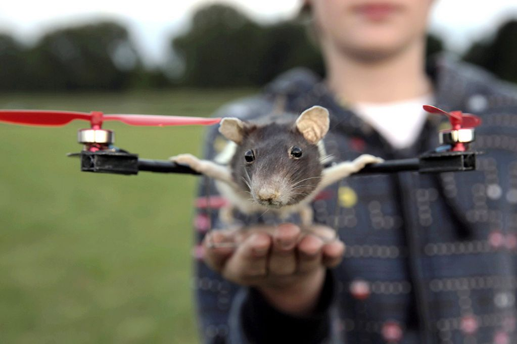 Pepeijn-with-his-flying-pet-rat