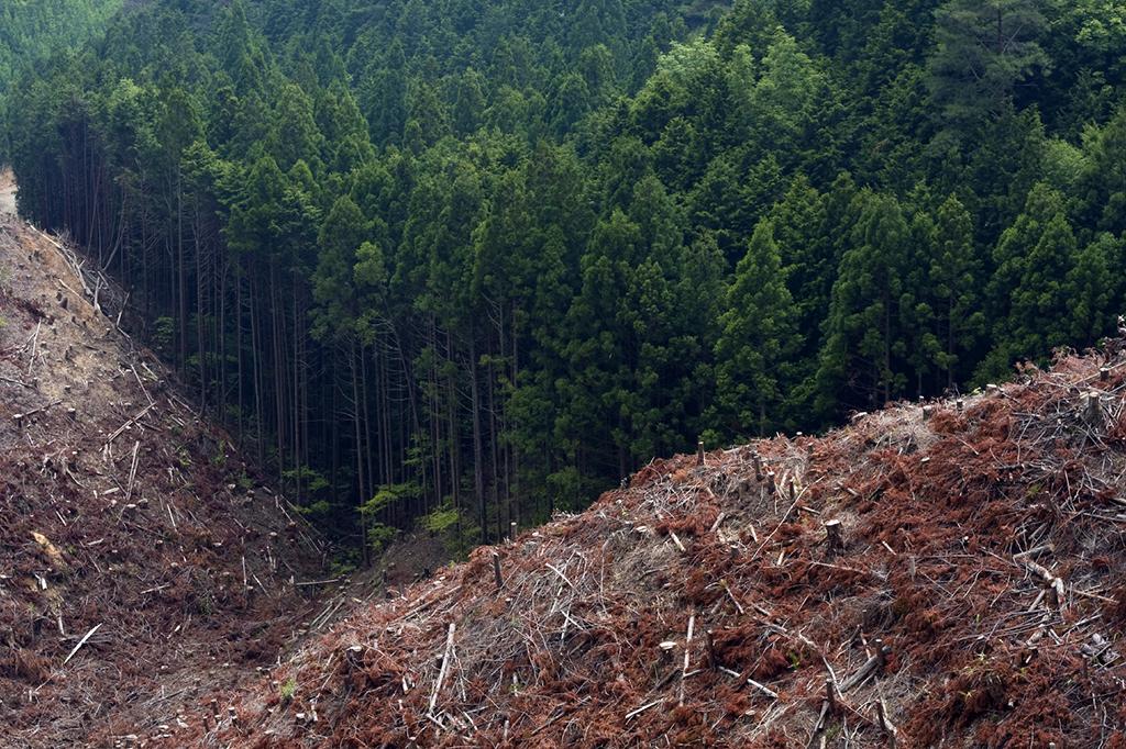 the-Edge-of-Deforestation