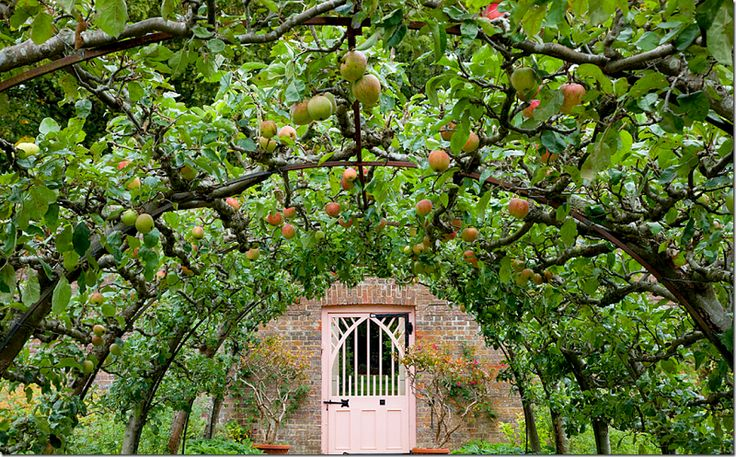 fruit-garden-design