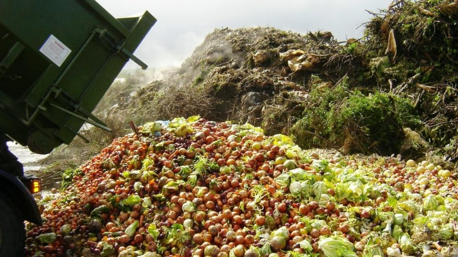Pilot-scheme-shows-promise-in-repurposing-commercial-food-wastes