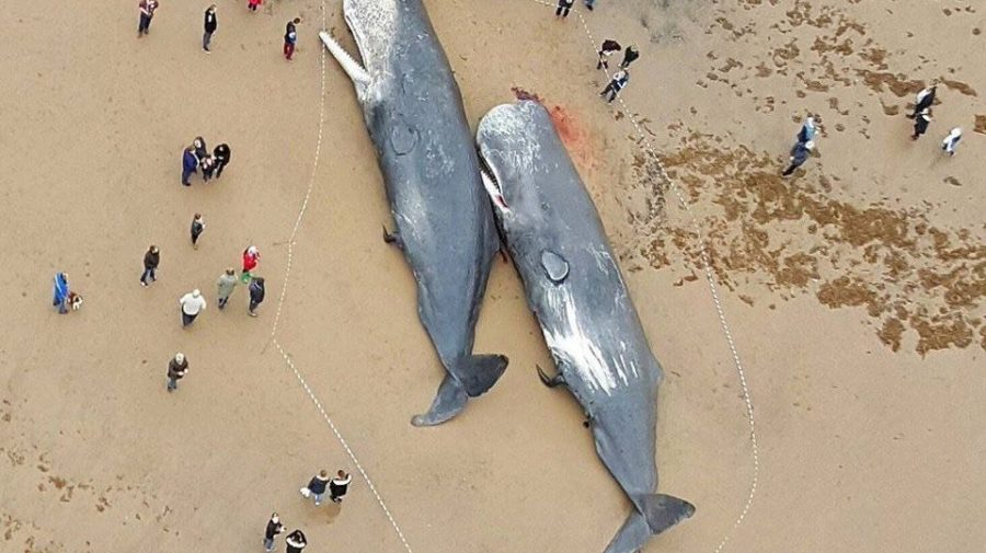 Sperm-Whales-Found-Dead-In-Germany-Stomachs-FULL-Of-Plastic-And-Car-Parts