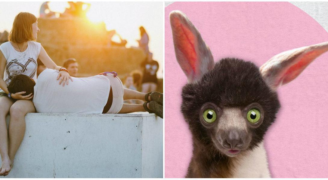 collage lemur
