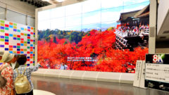 8K, Super Hi-Vision, display at NHK on Aug. 19, 2015. Hodo-bu Murai reports. YOSHIAKI MIURA PHOTO