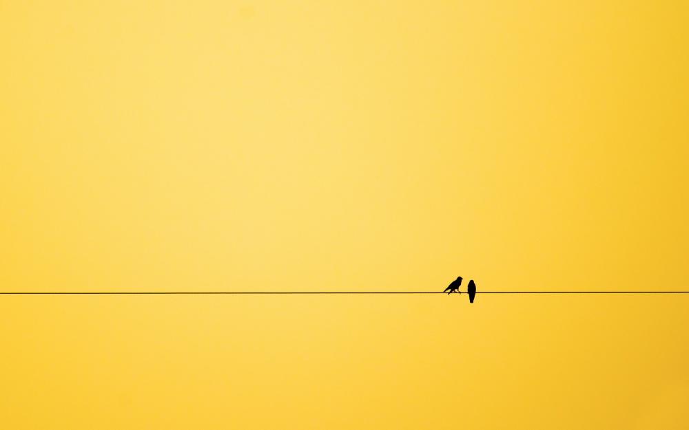 444955-1000-1457808129-minimalism-birds-background