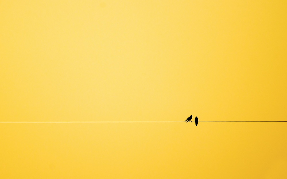 444955-1000-1457808129-minimalism-birds-background