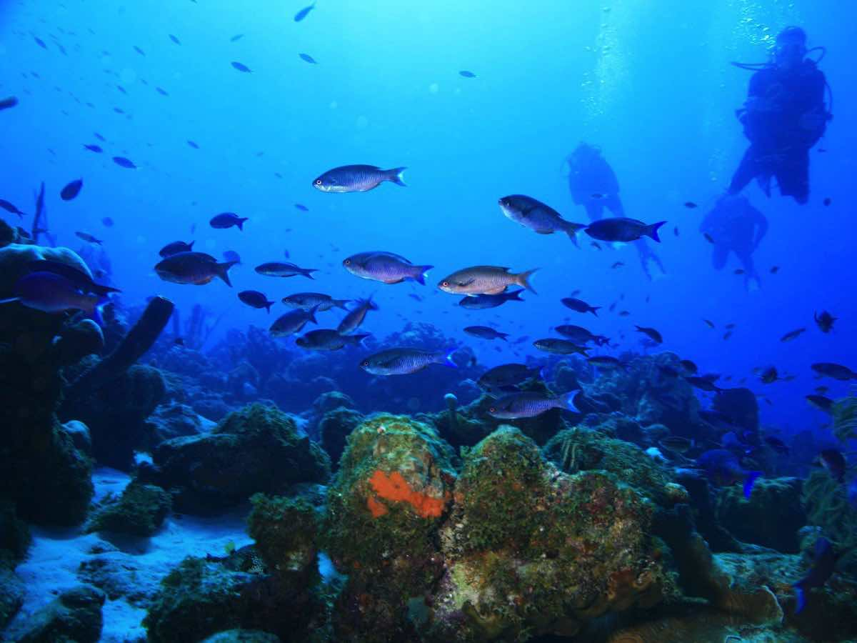 best-for-divers-curacao