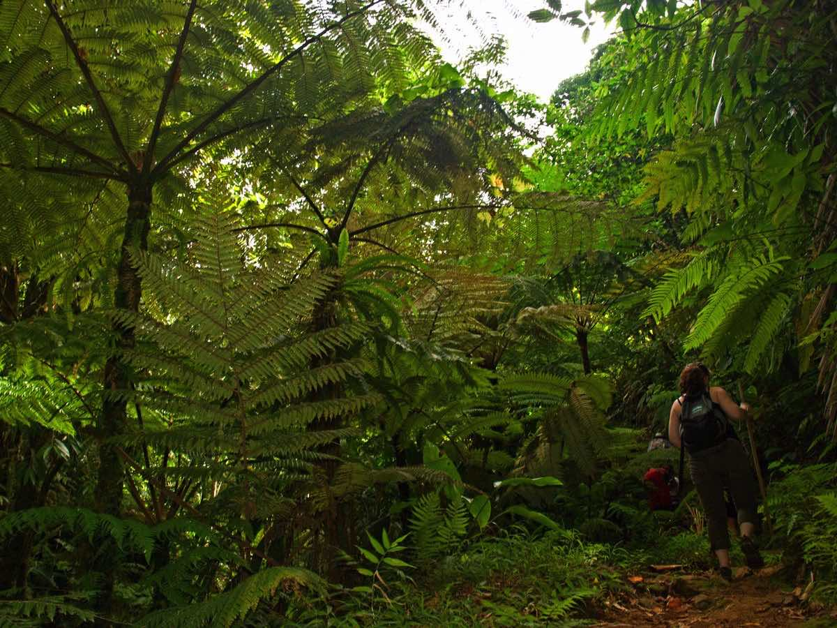 best-for-outdoorsy-types-dominica