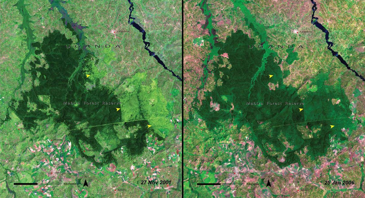 deforestation-of-mabira-forest-uganda-2001-vs-2006