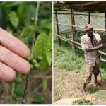 Erik Šimšík sa v Afrike zamiloval do výberovej kávy natoľko, že ju začal dovážať na Slovensko