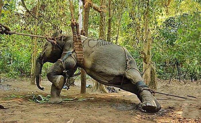 tripadvisor-bans-animal-cruelty-1