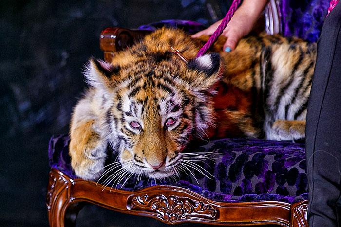 tripadvisor-bans-animal-cruelty-3