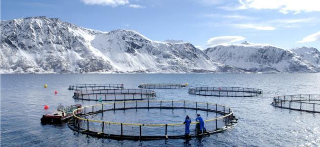 130916-norwegian-seafood-farm