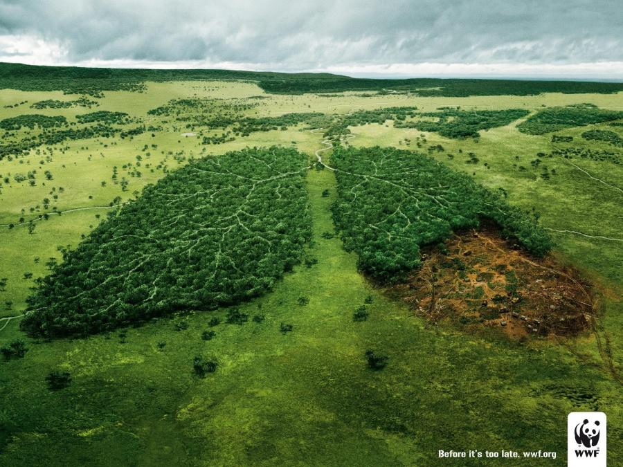 378005-900-1451984288-environmental-awareness-lungs-original-70801