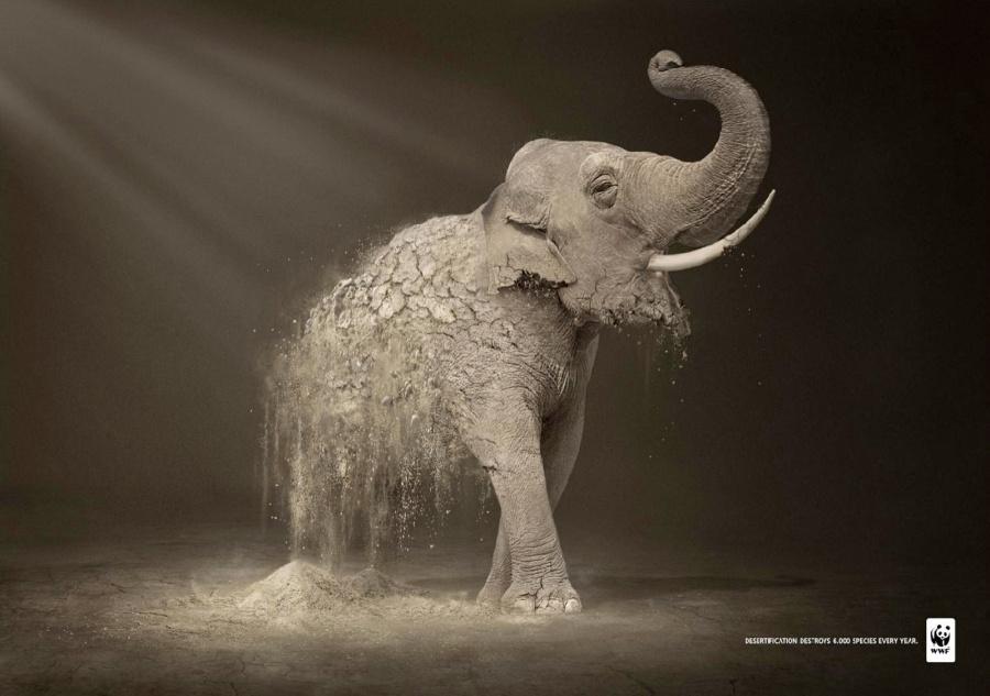 378705-900-1451984288-wwf_elephant