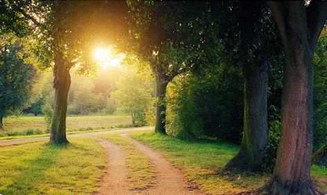 beautiful-nature-tree-trees-favim-com-286536