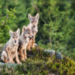6 dokumentov, ktoré zachytávajú krásu divokej prírody na Slovensku