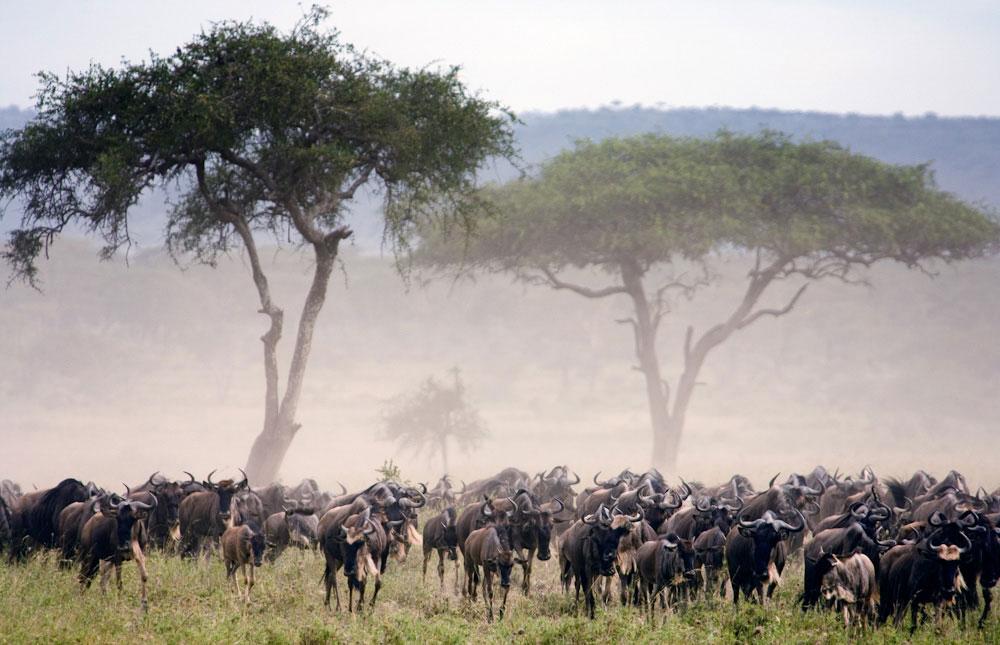 Serengeti_National_Park_020