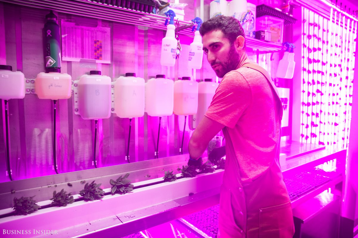 before-josh-aliber-24-moved-from-boston-to-brooklyn-to-join-square-roots-he-had-never-farmed-now-hes-starting-up-his-own-specialty-herb-business-and-running-a-vertical-farm