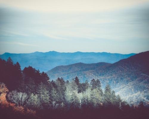 forest-mounta-mountain-mountains-nature-tree-favim-com-84410