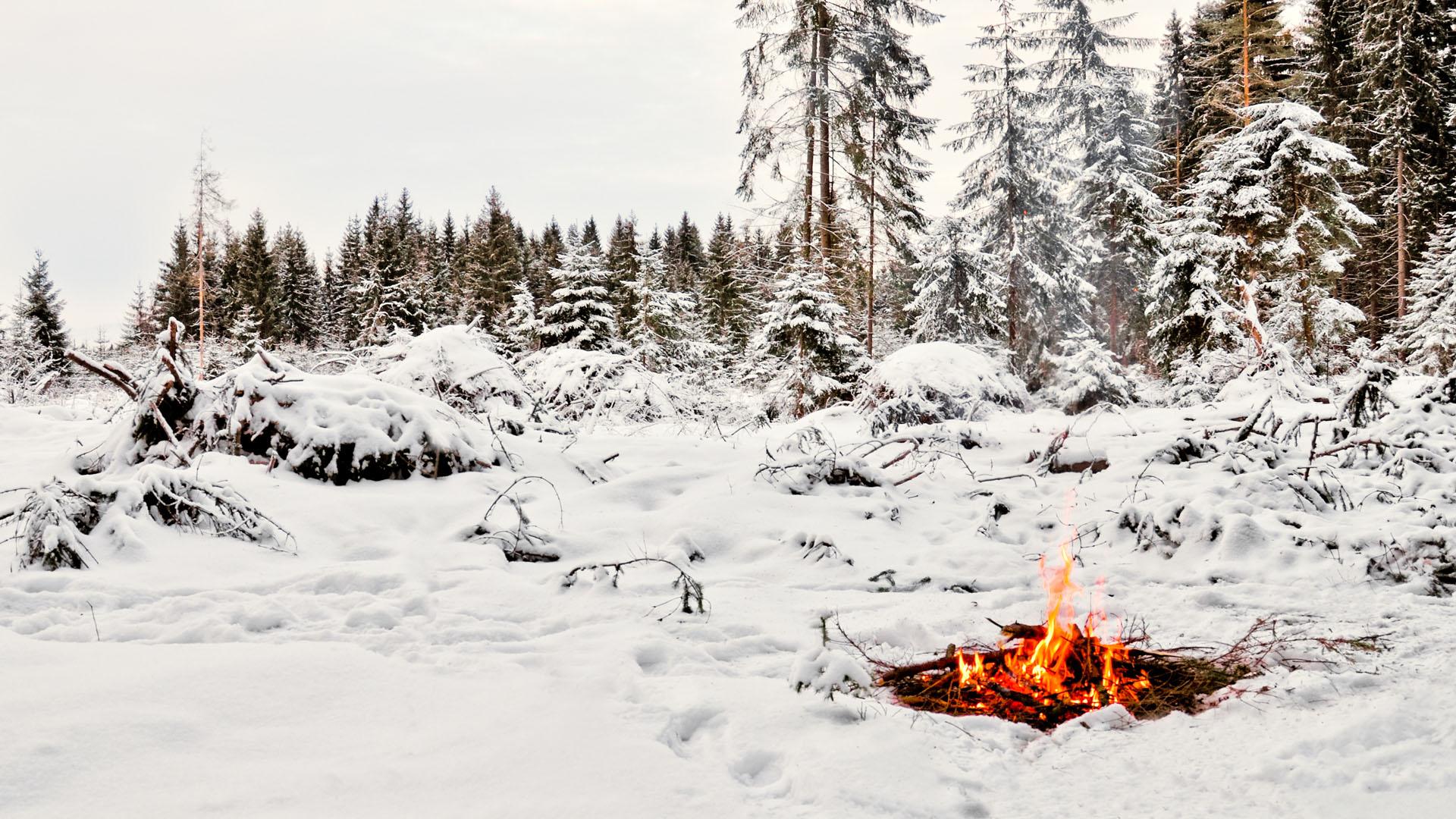 Как сделать в зимнем лесу