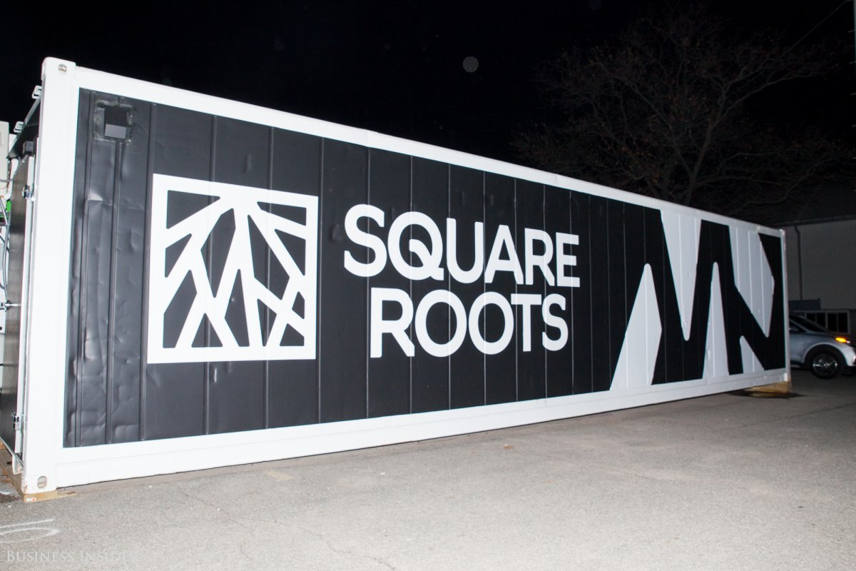 the-square-roots-farms-sit-between-an-old-pfizer-factory-and-the-apartment-building-where-jay-z-grew-up-in-brooklyn