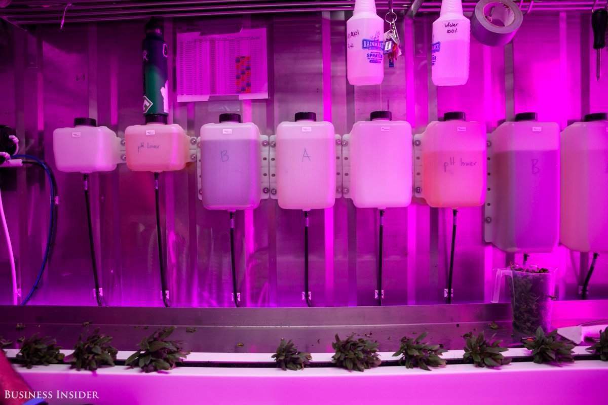 vertical-farms-can-grow-all-year-using-significantly-less-water-and-space-than-outdoor-farms