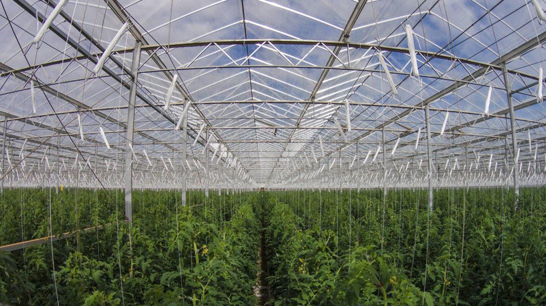 sundrop-farms-greenhouse