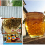 Slovenský med na svetovej úrovni. V rodine Dušana Dedinského sa vyrába tri generácie