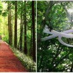 V tomto úžasnom parku sa zo všetkého vyskáčeš vkorunách stromov