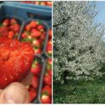 Emilove Sady – Slovenská ovocná farma, ktorá v Dvoroch nad Žitavou už 50 rokov produkuje kvalitné lokálne ovocie