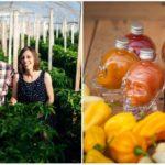 Pikantný biznis po slovensky: Na eko farme neďaleko Nitry produkujú kvalitné čili
