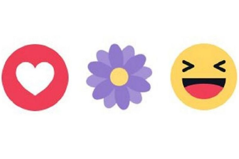 fialovy-kvet-1