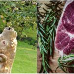 Farma, ktorá produkuje najlepšie slovenské hovädzie ak zvieratám sa správa súctou