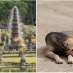 Na Bali môžeš namiesto kuraťa dostať na tanieri psa a nebudeš to ani tušiť
