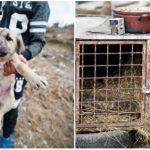 Prečo je zviera na Slovensku stále iba bezvýznamná vec?