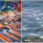 Najväčšie spoločnosti na lov rýb sa spojili, aby zastavili znečisťovanie oceánov