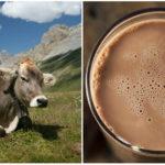 Milióny Američanov si myslí, že čokoládové mlieko pochádza zhnedýchkráv