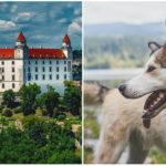 Veľký deň pre Slovensko: Podľa nového zákona zviera už nie je vecou