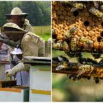 Na Slovensku vzikla prvá vzdelávacia farma so včelami, ktorá ponúka viac ako len med