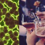 Vedci vyvinuli prvé pivo obsahujúce probiotiká