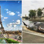 Paríž šokovala obria veľryba na brehu Seiny. Čo sa tu udialo?