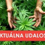 Grécko oficiálne zlegalizovalo marihuanu na lekárske účely