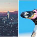 Čile zastavilo ťažobný projekt za miliardy kvôli ochrane vzácnych tučniakov
