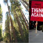 Vyrastú vďaka hlúpym výrokom Donalda Trumpa milióny stromov po celom svete?